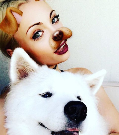 #bff @annikasamoyed #puppy #samoyed